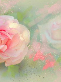 Арт.25821 Роза