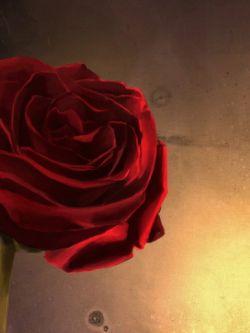 Арт.33416 Красная роза